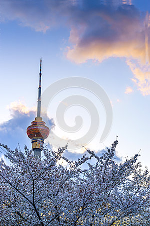 Free The Plum Blossom Foil Of The Central Radio And Television Tower Stock Image - 54058301