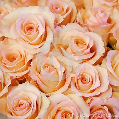 Free The Pretty Pale Pink Rose Bouquet Royalty Free Stock Image - 64634746