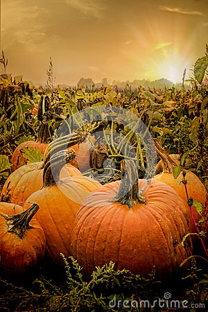 Free The Pumpkin Patch Stock Images - 34670914