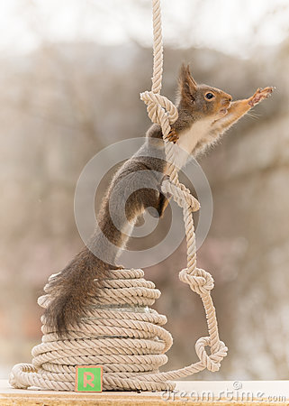 Free The Rope Starts With R Stock Images - 91234134