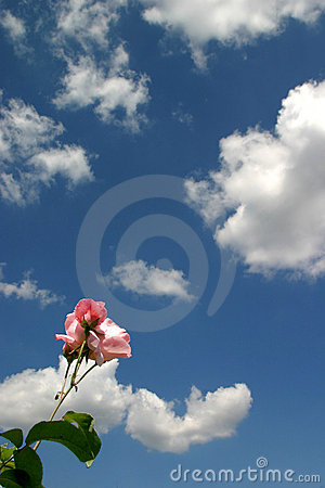 Free The Rose And The Sky Royalty Free Stock Photos - 61438