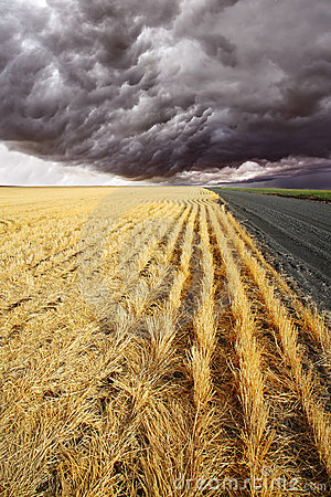 Free The Rural Road To Fields Royalty Free Stock Photo - 10277605