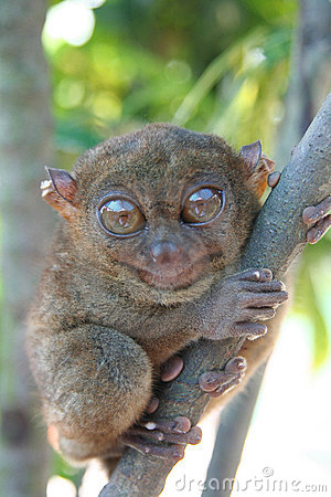 Free The Smallest Primate Stock Photo - 8069170