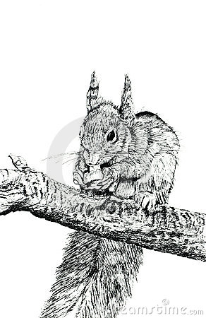 Free The Squirrel Stock Images - 507534