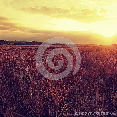 Free The Sunset Cloudy Orange Sky Background. Setting Sun Rays On Horizon In Rural Meadow. Stock Photos - 44855223
