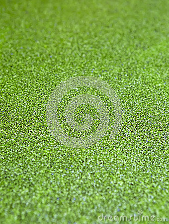Free The Surface Is Covered With Green Duckweed. Royalty Free Stock Image - 45265156