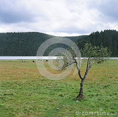Free The Tree Of The Grasslands Royalty Free Stock Photography - 36106527