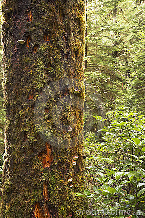 Free The Tree Trunk Covered By A Moss Royalty Free Stock Image - 6812726