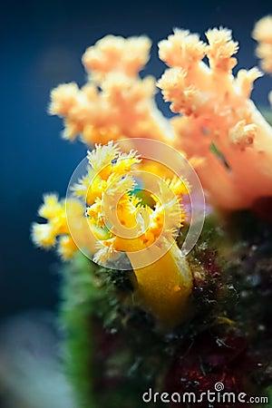 Free The Underwater Life Stock Photo - 17481750