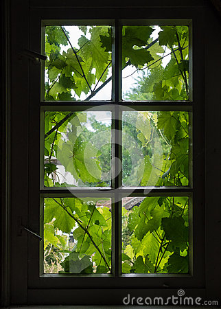 Free The Wall And Window Of An Old Farmhouse Inside With Grape Leaves Royalty Free Stock Photo - 89638535