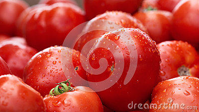 There are many tomatoes