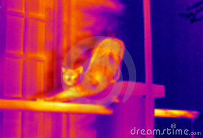 Thermographe-Étirage du chat