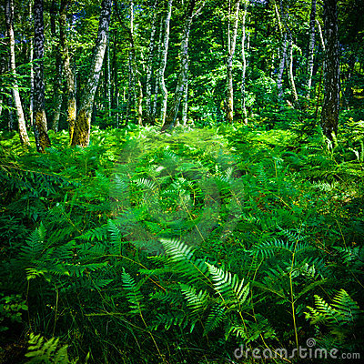 Thick fern