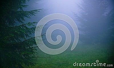 Thick fog