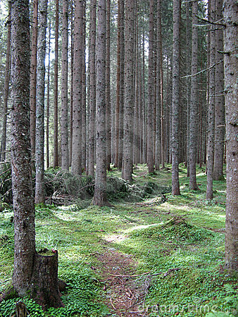 Free Thick Forest Stock Photos - 4281433