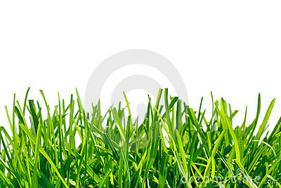 Thick grass on white background
