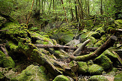 Thick Japanese forest