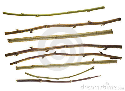 Thin dry prickly sticks