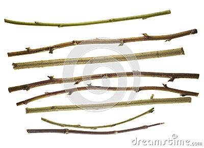 Thin dry prickly sticks