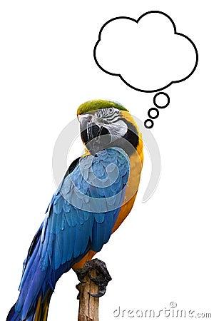 Free Thinking Bird Royalty Free Stock Photo - 14209255