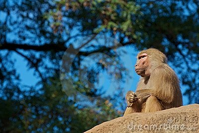 Thinking moneky