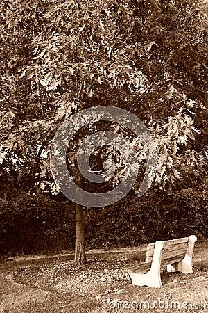 Thinking Tree Bench