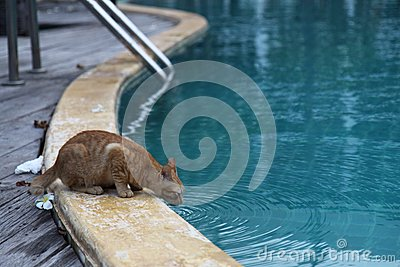 Thirsty cat stock photo image 44275918 How to make swimming pool water drinkable