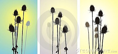 Thistle, vector illustration