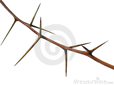 Thorns Royalty Free Stock Image - Image: 16013196
