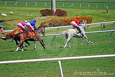 Thoroughbred Racing on Grass