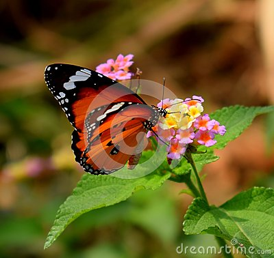 Free Those Geometry On A Flower And A Butterfly Stock Photos - 118468523