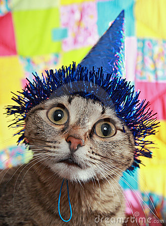 Free Thoughtful Cat In A Celebratory Cap Stock Images - 7469854