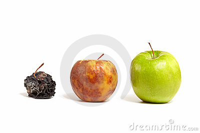 Three apples: fresh, rotting and dead