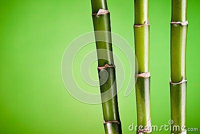 Three bamboo stems on green