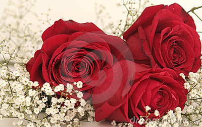 Three beautiful red roses