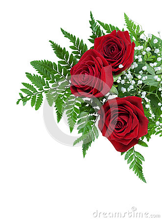 Free Three Beautiful Red Roses On A Fern Leaf With Tiny White Flowers Stock Images - 48399424