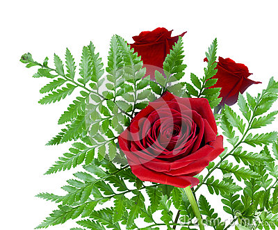 Three Beautiful Red Roses Together With Fern Stock Photo ...