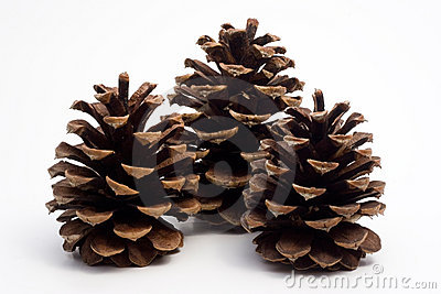 Three big pine cones
