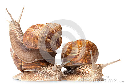 Three big snails Stock Photo