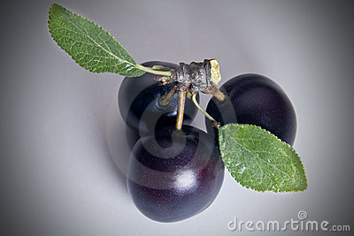 Three Black Cherry Plums