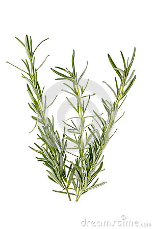 Free Three Branches Of Rosemary Stock Images - 42203584