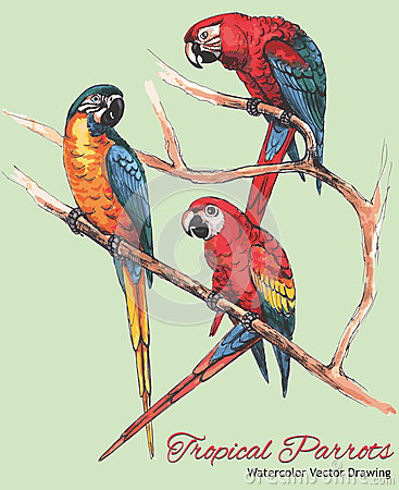 Free Three Bright Macaw Parrots On A Branch (Watercolor Vector Drawing) Stock Photography - 53346132