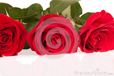 Three bright roses on the white background
