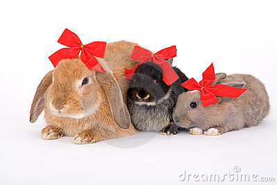 Three bunny wearing a red bow