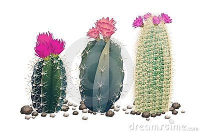 Three cactuses without pots