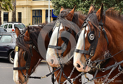 Three Cart Horses
