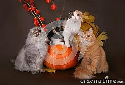Three cats in the autumn still life.