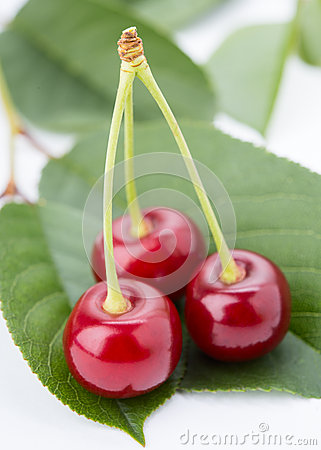 Three Cherry On A Petal Royalty Free Stock Images - Image: 25187079