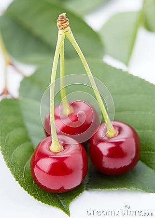 Three cherry on a petal