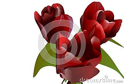 Three claret flowers tulips